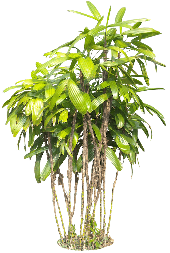 Plant Png 2
